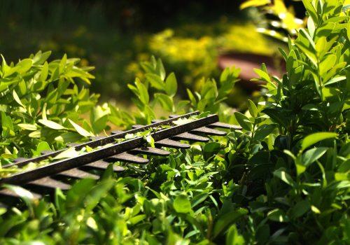 hedge-3393849_1920